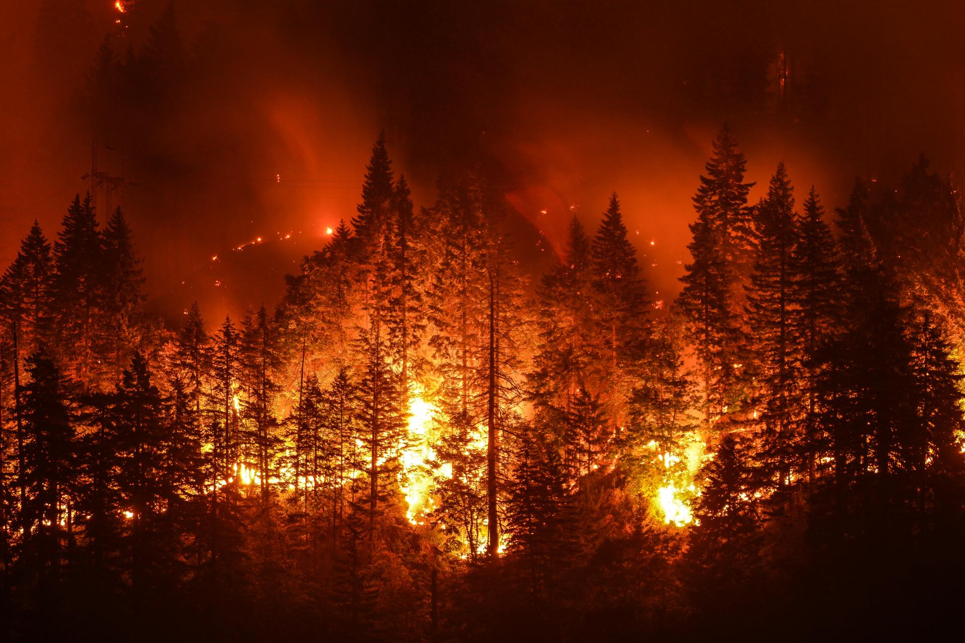 Sansiri Tree Day Wildfire