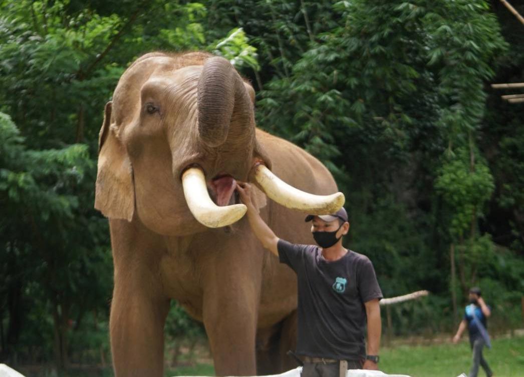 สมาคมสหพันธ์ช้างไทย No One Left Behind แสนสิริไม่ทอดทิ้งใคร